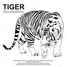 imagen blanco y negro en illustrator tigre caminando paso tigre blanco y negro de victor vector de