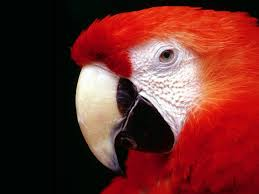 parrot high resolution wallpapers hd wallpapers