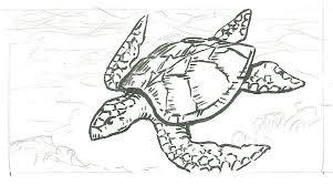 turtle sketch card wip by tlclark on deviantart
