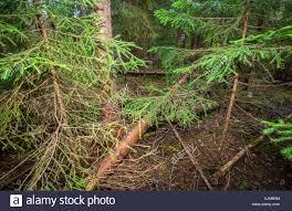 deep forest green deep forest green stock photos u0026 deep forest green stock images