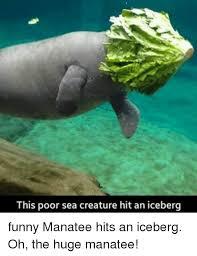 Manatee Meme - 25 best memes about funny manatee funny manatee memes