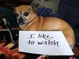 Dog Shaming Meme - dogshaming know your meme
