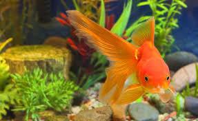 aquarium dgm aquarium shop ornamental fish offerhut lk