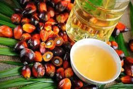 Minyak Cpo trading crude palm cpo artikel komoditas by bayu