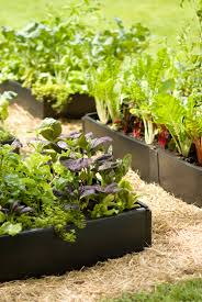 Best Soil For Vegetable Garden In Raised Bed by Raised Bed Potatoes