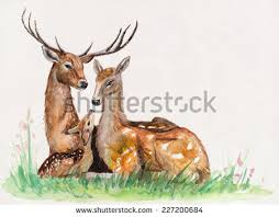 deer family drawing pencil and in color deer family