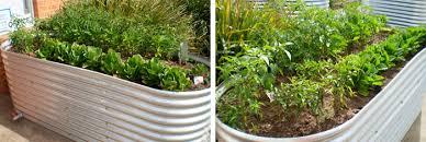 raised vegie beds geelong flower corrugated iron bannockburn