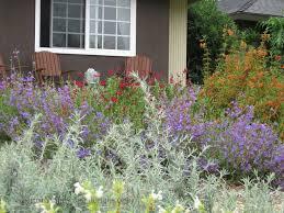 44 best california native landscaping images on pinterest