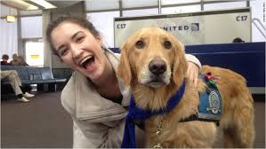 Comfort Retrievers United Airlines Brings In Comfort Dogs To Help Reduce Airport