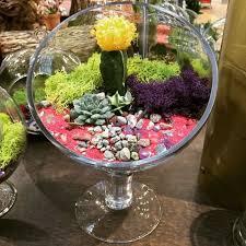 en iyi 17 fikir terrarium bowls pinterest u0027te terrarium