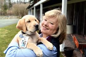 How Does A Guide Dog Help A Blind Person How Watson Is Helping More Puppies Become Guiding Eyes For The
