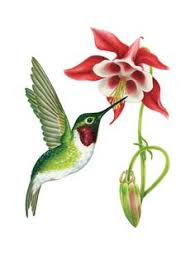 red throat hummingbird clipart clipground