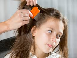 lice combs and how to use them babycenter
