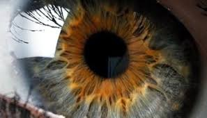black rage and the bluest eye david boles blogs
