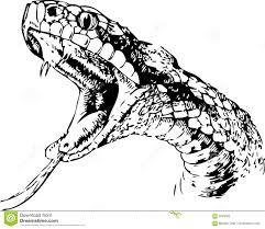 king cobra royalty free stock image image 7280226