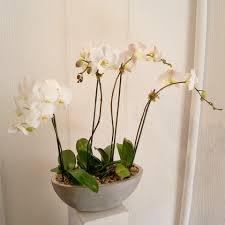 Orchid Flower Arrangements Orchids Flower Arrangements In Scottsdale Paradise Valley Florist