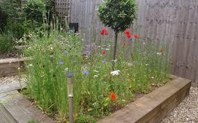 prato fiorito trucchi foto giardini fioriti amazing via laghetti castelnuovo di assisi