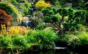 Pretty Plants by Miscellaneous Freshness Cascades Water Park Flowers Trees Pretty