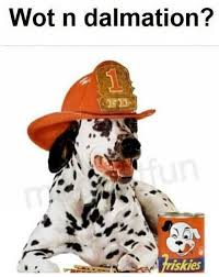 Wot Memes - dopl3r com memes wot in tarnation with a dalmation