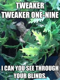Tweaker Memes - tweaker tweaker one nine i can you see through your blinds