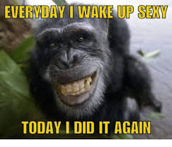 Sexy Monkey Meme - everyday i wake up sexy today i did it again dank meme on me me