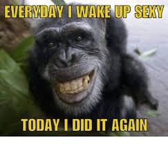 Sexy Monkey Meme - everyday i wake up sexy today i did it again dank meme on me me