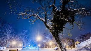 winter tree winter park winyter festive holidays