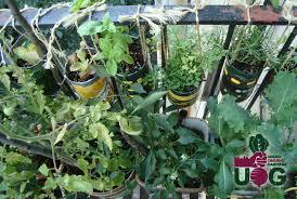 basics of starting an apartment vegetable garden urban organic