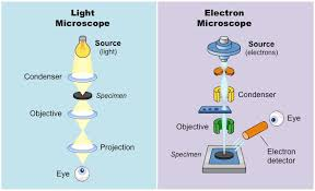 name one advantage of light microscopes over electron microscopes microscopes bioninja