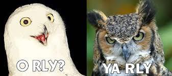 Meme Orly - orly hay llamas