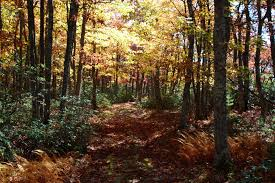West Virginia forest images File forest trail north fork mountain west virginia jpg