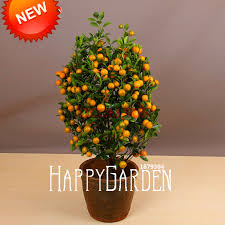 compare prices on flowering trees sale shopping buy low