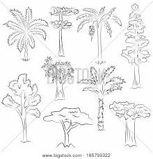 hand drawn set trees doodle vector u0026 photo bigstock