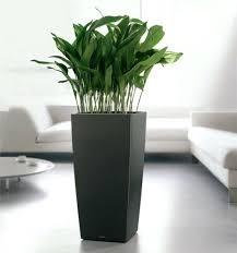 decorative indoor plants planters for indoor plants is decorative pots for indoor plants