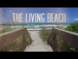 living on the beach the living beach youtube