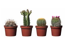 plant awesome indoor cactus plants house plants succulents