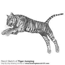 learn how to draw a tiger jumping big cats by drawing