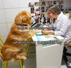 Dog Doctor Meme - infinite doggo memes home facebook
