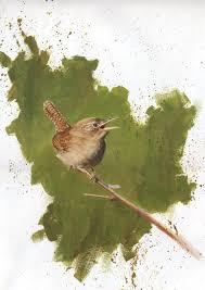 john mullane art bird sketches