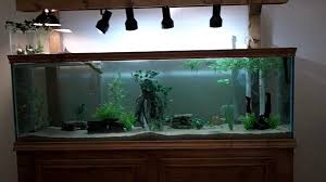 fish decorations for home 100 fish decorations for home the best home aquariums of