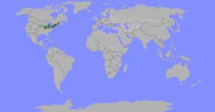 Venezuela Location On World Map by Bastonia Jingle Quackerz Wiki Fandom Powered By Wikia