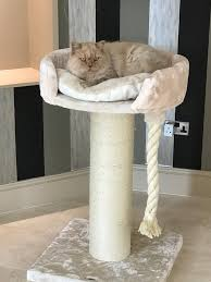 the mont blanc katrux large stylish u0026 luxury cat tree towers