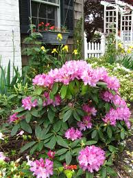 English Cottage Gardens Photos - english cottage garden design for beginners views from the small