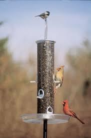 birds pictures of birds