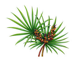 my battle with hair loss does saw palmetto prevent hair loss