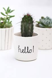Cute Plant by Best 25 Succulent Pots Ideas On Pinterest Indoor Succulents