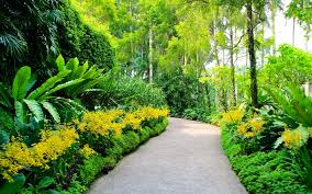 singapore botanic gardens plants walking path trees hd background
