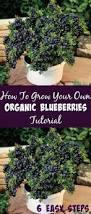 best 25 grow your own ideas on pinterest gardening calendar