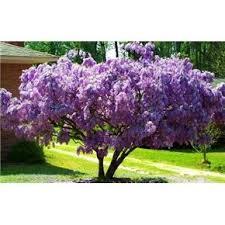 66 best trees images on garden plants garden trees
