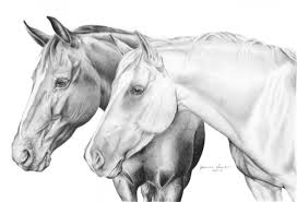 pencil sketches of horse heads pencil drawing collection